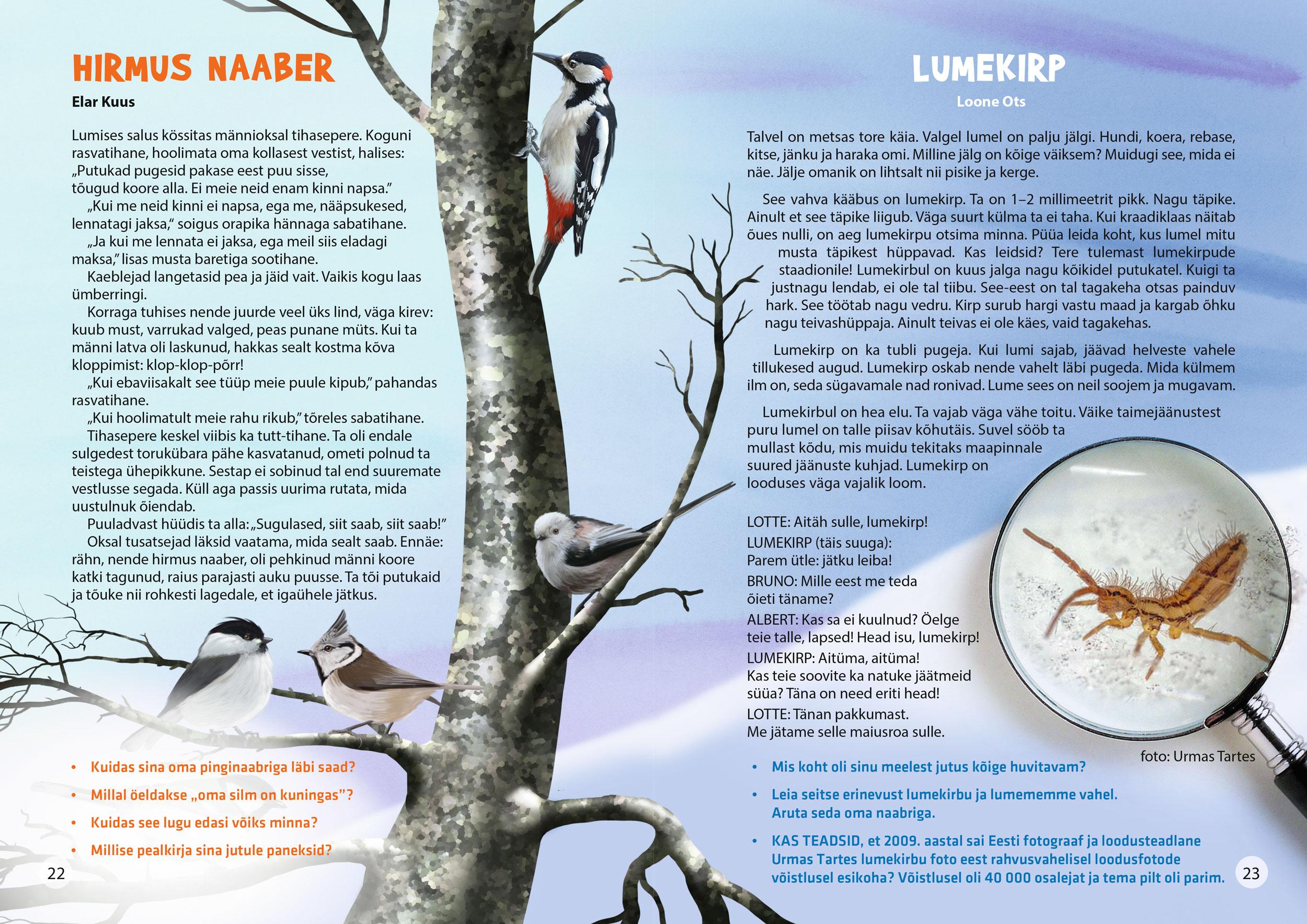 lindude toitmine talvel